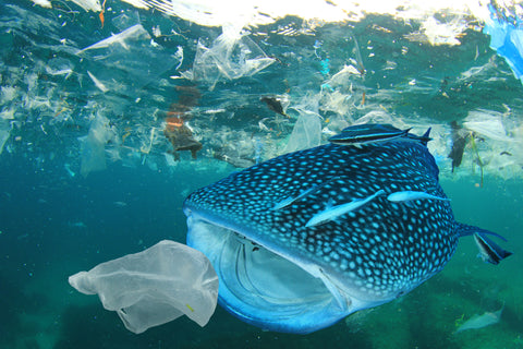 Save marine life and animals