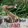 Plants That Repel Snakes From Your Garden [Do They Even Work]