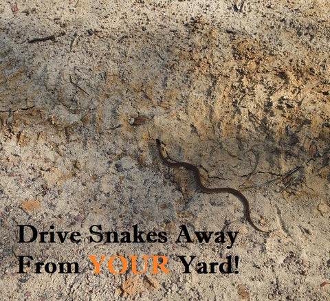 How To Repel Snakes From Your Yard