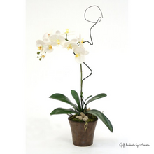 Load image into Gallery viewer, Phalaenopsis Orchid Plant - Gift baskets by Amora