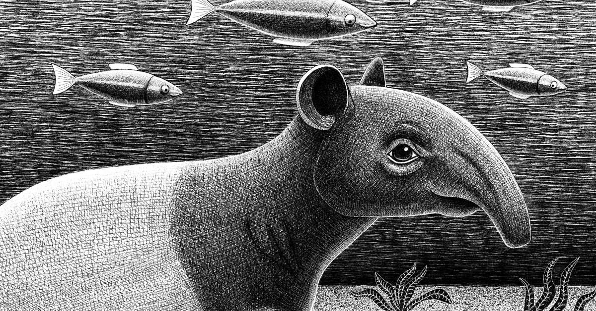 Tapirs | Endangered Animals Collection | Lucia Eggenhoffer | Eggenland