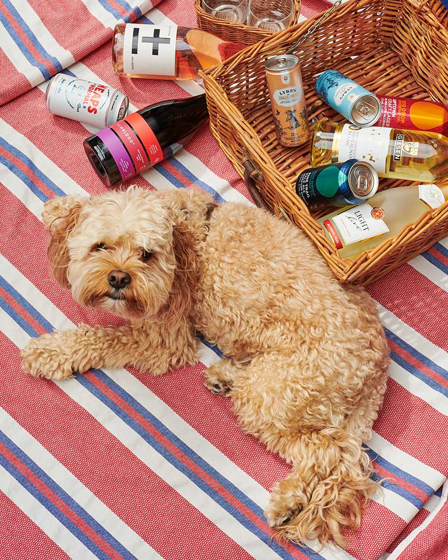 Puppy dog and picnic basket with non-alcoholic drinks