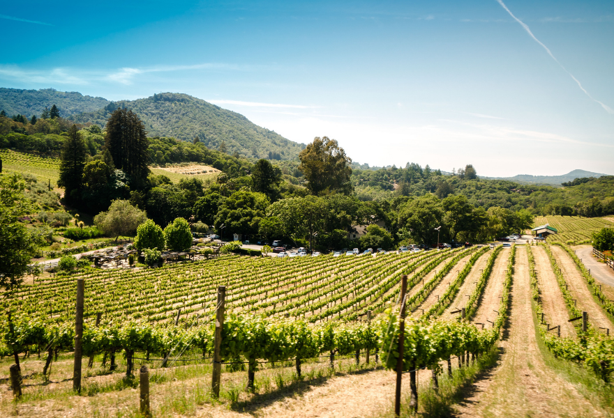 The popularity of Chardonnay has been up and down
