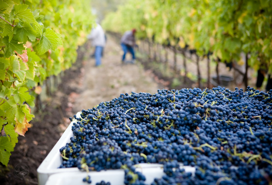 Is wine good for you? Non alcoholic wine certainly is