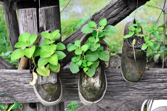 Coronavirus: The Other Shoe & Herbal Preparedness
