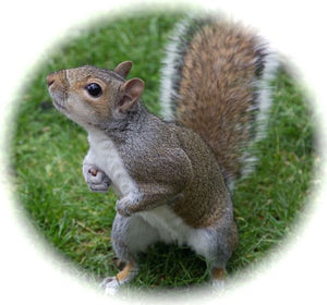 Squirrel!...The Secret to Rapid Wound Healing
