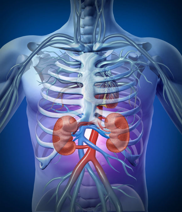 Kidney & Bladder Formulas