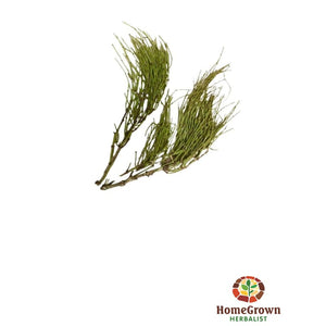 Brigham tea (Ephedra nevadensis) - simple HomeGrown Herbalist angelica herb simple single