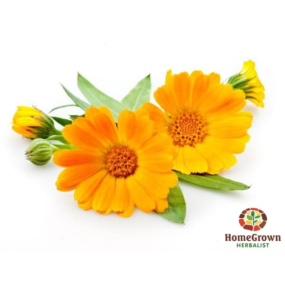 Calendula Monograph - Audio File - Homegrown Herbalist