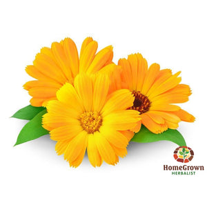 Calendula Seed - Homegrown Herbalist Plants & Seeds