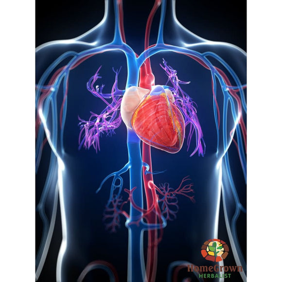 Cardiovascular Part 1 Audio File - Homegrown Herbalist