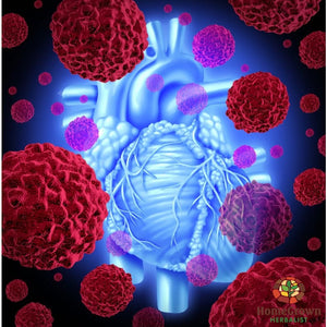 Cardiovascular Part 2 Audio File - Homegrown Herbalist