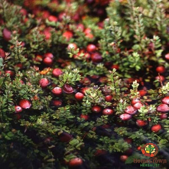 Cranberry (Vaccinium macrocarpon) - simple HomeGrown Herbalist Cranberry herb simple single