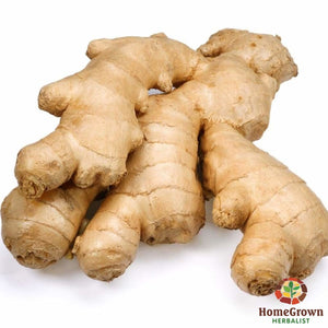 Ginger (Zingiber officinale) - simple HomeGrown Herbalist ginger herb simple single