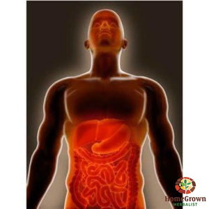 Intestine - Leaky Gut - Herb Formula Homegrown Herbalist Cleanse Digestive Immune System Formulas Nutritive & Support Formulas