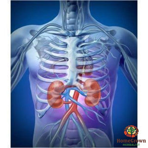 Kidney - Builder - Herb Formula Homegrown Herbalist Bladder & Kidney Formulas Cleanse Kidney