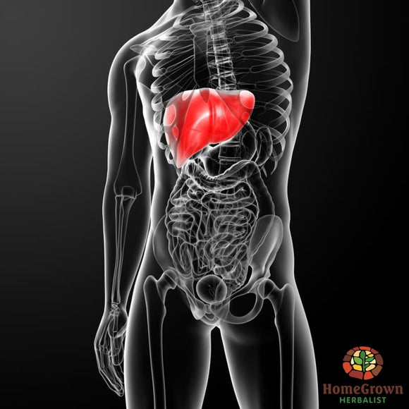 Liver - Builder - Herb Formula Homegrown Herbalist Cleanse Liver & Gall Bladder Formulas