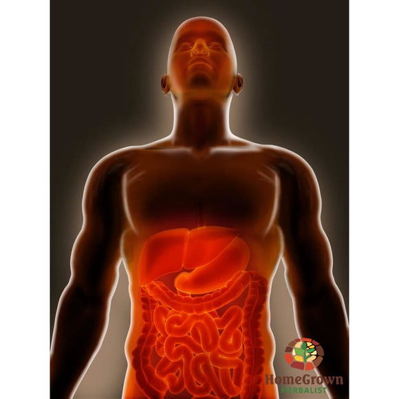 Lower Digestive System Part 1: Anatomy & Physiology - Learning Modules Homegrown Herbalist