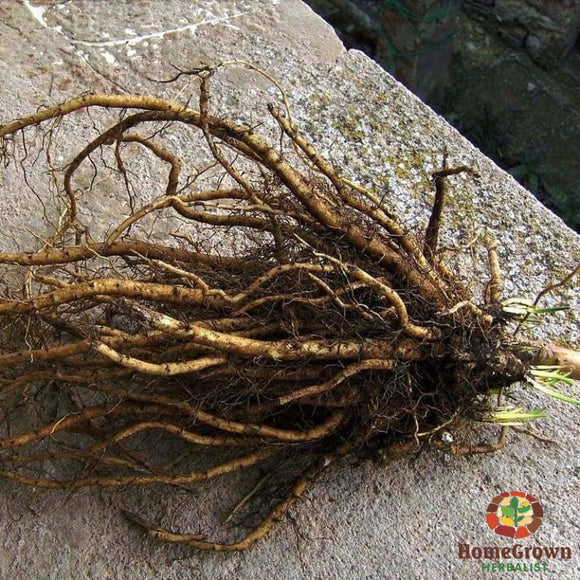 Marshmallow Root (Althaea officinalis) - simple HomeGrown Herbalist herb Marshmallow root simple single