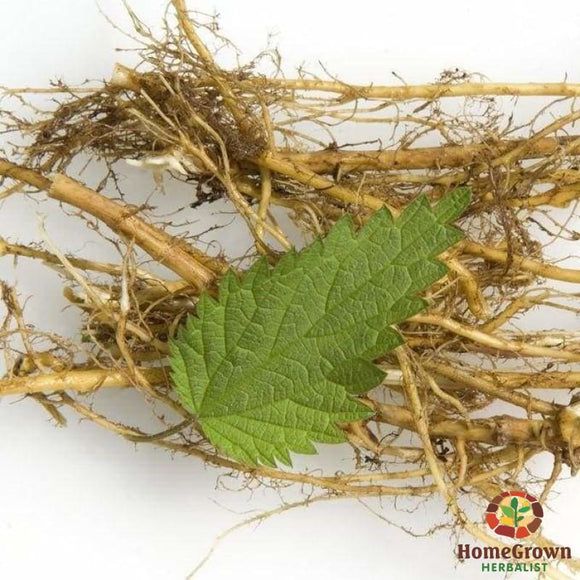 Nettle Root (Urtica dioica) - simple HomeGrown Herbalist herb Nettle root simple single