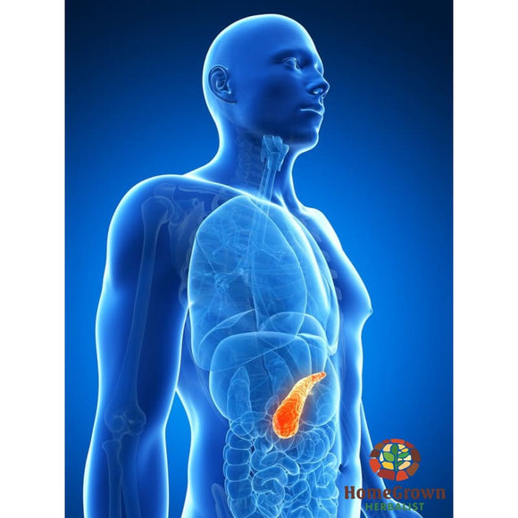 Pancreas: Function Dysfunction & Herbal Interactions - Audio File - Homegrown Herbalist