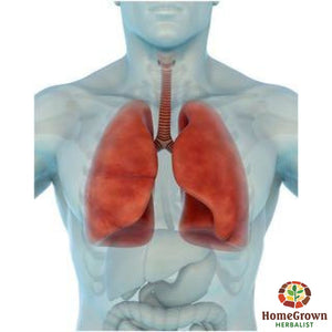 Respiratory - Combo - Herb Formula Homegrown Herbalist Emergency & First Aid Formulas Respiratory Formulas