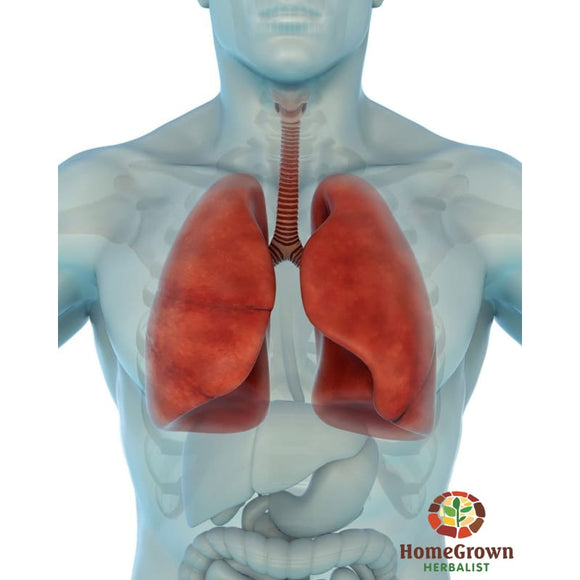 Respiratory System: Function Dysfunction & Herbal Interaction - Audio File - Homegrown Herbalist