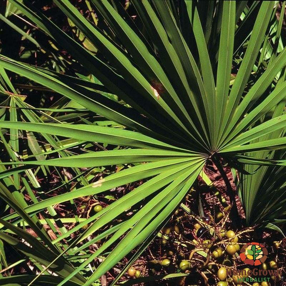 Saw Palmetto (Serenoa repens) - simple HomeGrown Herbalist herb Saw Palmetto simple single
