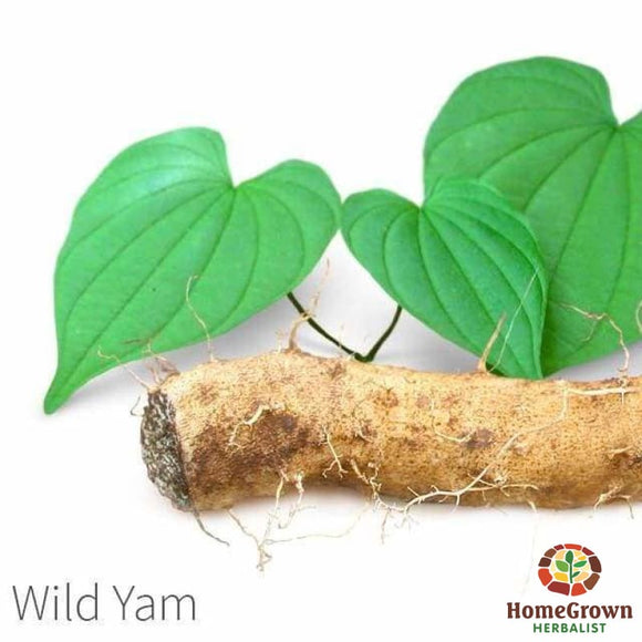 Wild Yam (Dioscorea villosa) - simple HomeGrown Herbalist herb simple single Wild Yam
