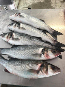 Sea bass (Line Caught)
