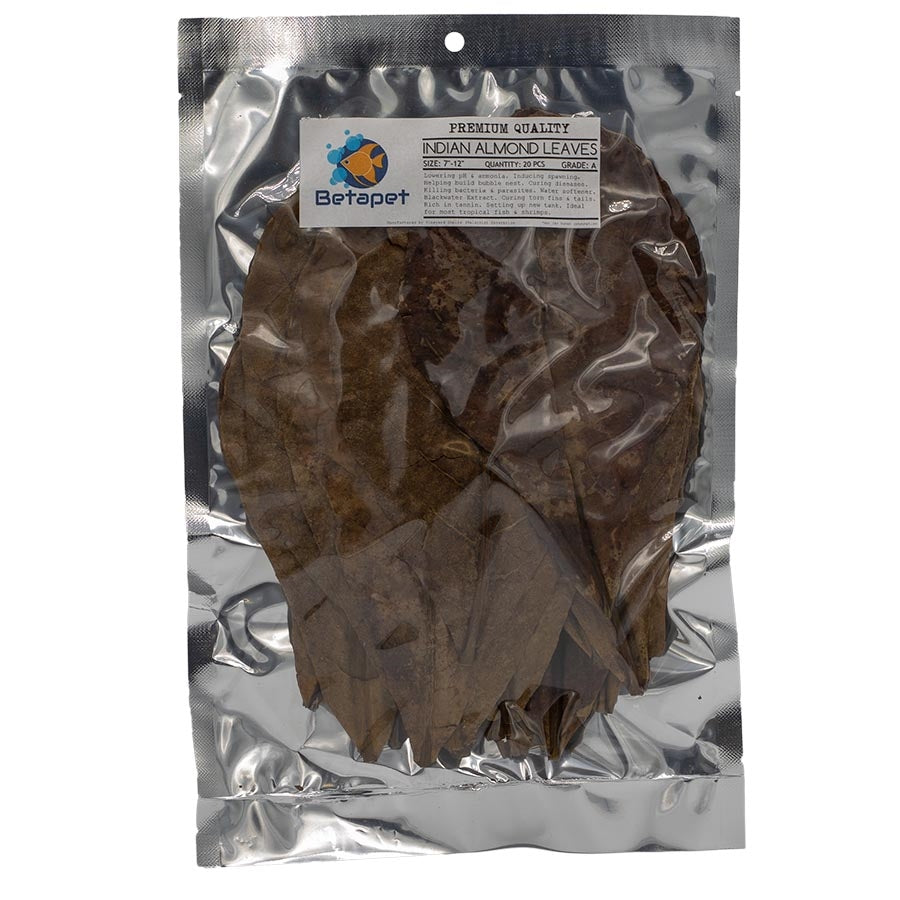 Betapet 20 Medium Indian Almond Leaves- A Grade 17cm - 30cm IAL