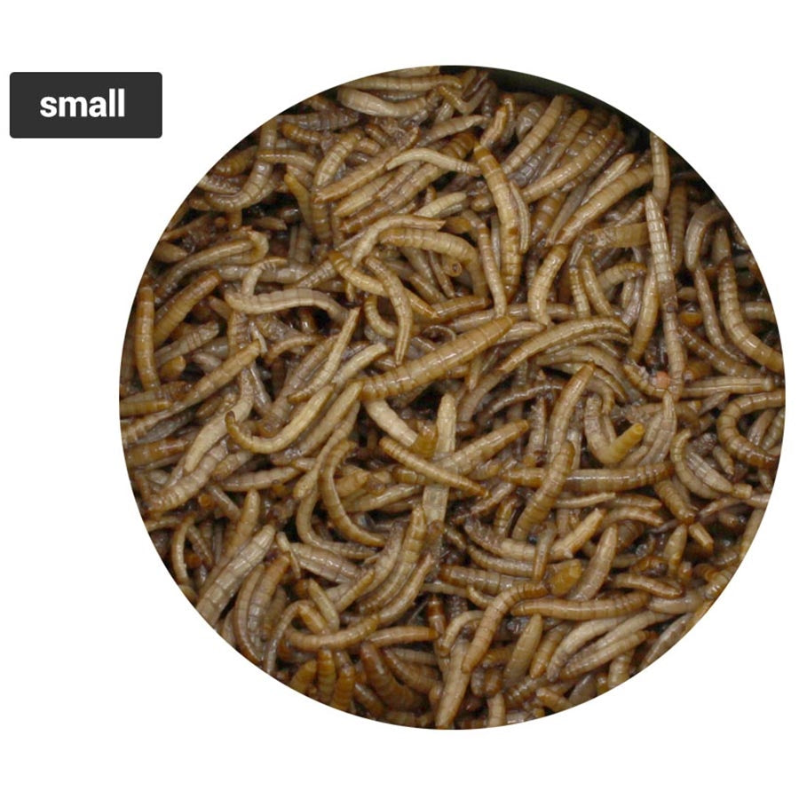 JurassiDiet EasiWorm Small 35g. By Seachem