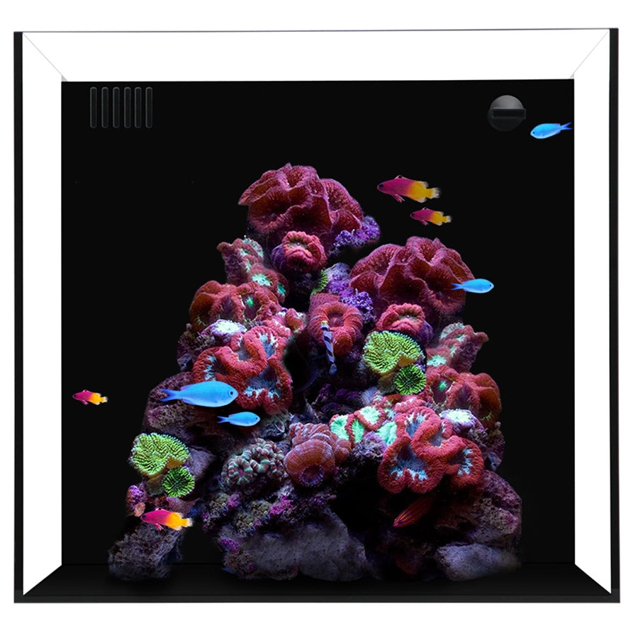 Waterbox Cube 10 Aquarium - In Store Pick Up