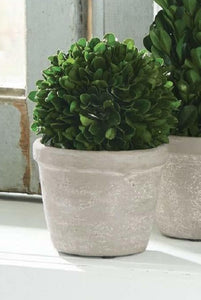 Mud Pie* Round Small Preserved Boxwood Potted Topiary