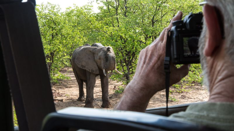 photographie elephant