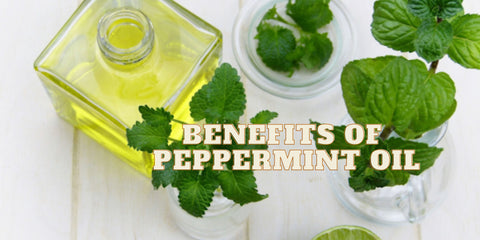 peppermint oil, peppermint, peppermint essential oil, peppermint oil for hair, mint oil, peppermint oil price, peppermint oil for headaches, peppermint oil for hair growth, peppermint oil for hair growth, pure peppermint oil, peppermint leaf, peppermint oil for skin, peppermint essential oil for hair, peppermint essential oil for hair, amazon peppermint oil, mint oil price, organic peppermint oil,  peppermint aromatherapy, mint oil for hair, peppermint for headaches, best peppermint oil, peppermint oil for lips, peppermint hair growth, peppermint oil for toothache, buy peppermint oil, peppermint oil for migraines, peppermint oil for face, peppermint for hair, peppermint oil for acne, peppermint oil in eye, peppermint oil in bath, peppermint oil for hair loss, use of peppermint oil, peppermint oil for pain,