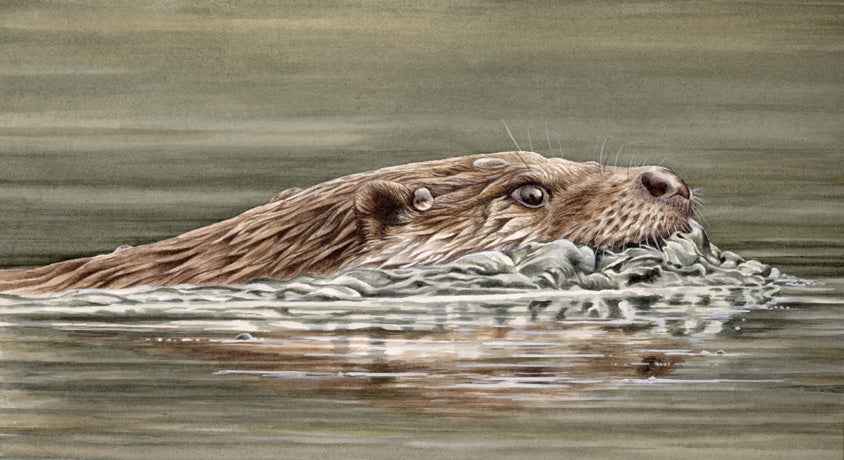 Limited Edition Fine Art Otter Prints (Lyn Wells)