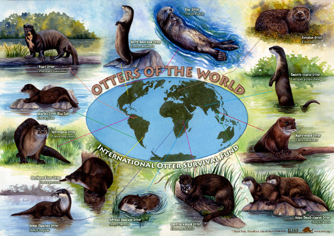 IOSF Otters of the World Poster