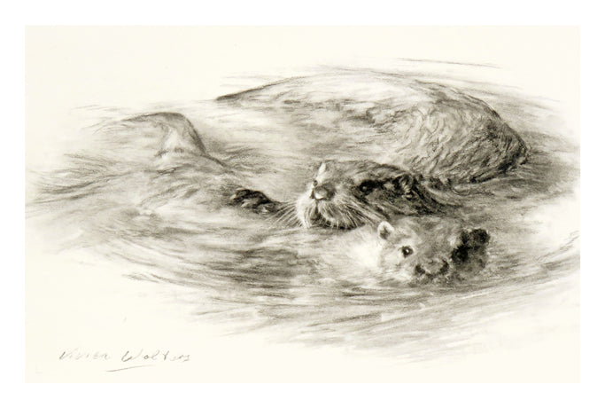 Limited Edition Otter Art (Vivien Walters)