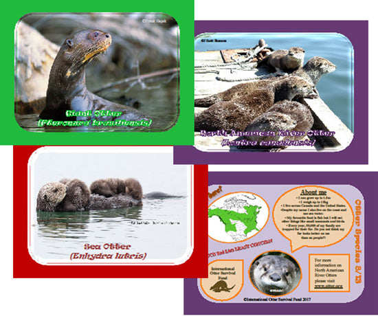 IOSF Otter Species Trading Cards