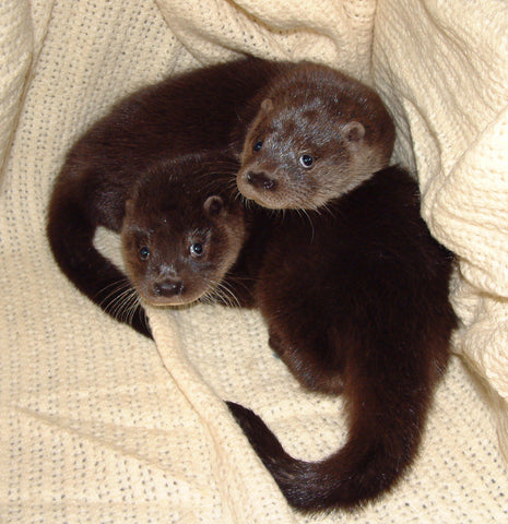IOSF New Otter Hospital Appeal