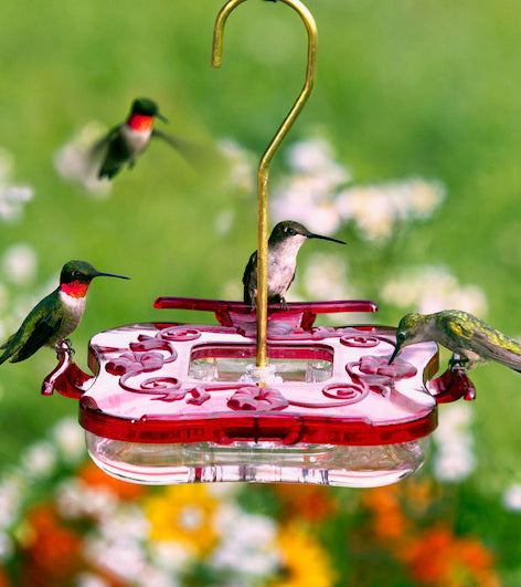 Aspects HummZinger® 8oz Square - Hummingbird Market of Tucson, Arizona. Feeders and Nectar