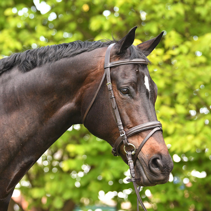 ACADEMY SNAFFLE BRIDLE