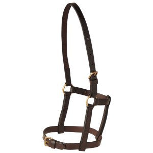 LEATHER FOAL HALTER