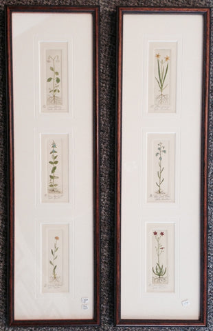 3 tiny Wild Flowers Verticals