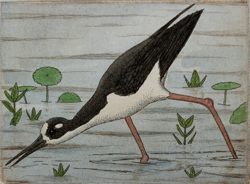 Black Necked Stilt II