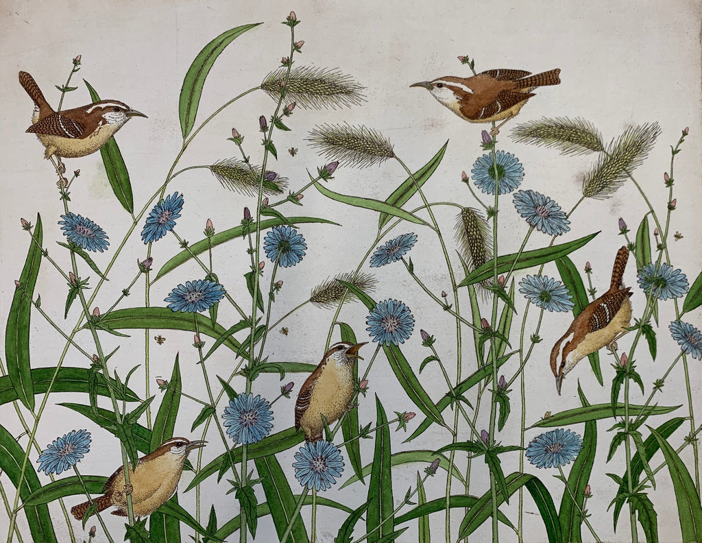 Carolina Wrens and Chicory with Foxtails