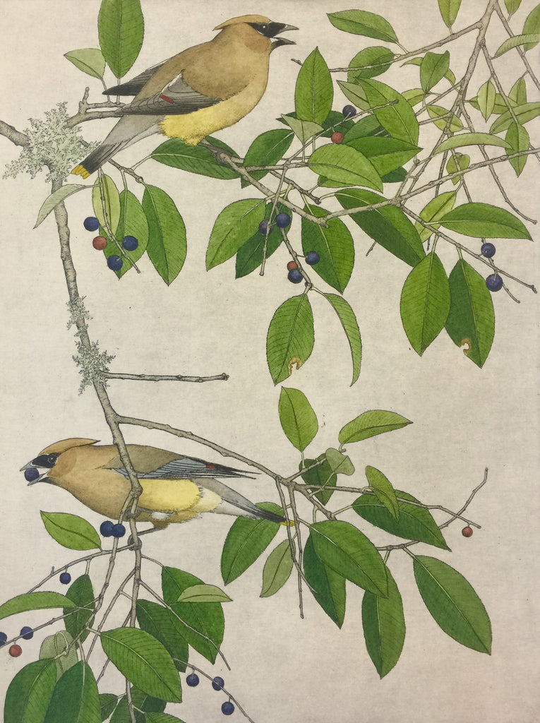 Cedar Waxwings and Wild Cherries