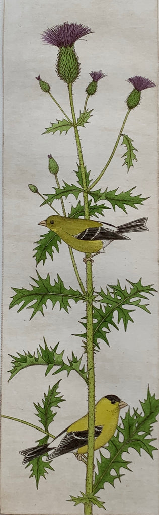Thistle and Goldfinches
