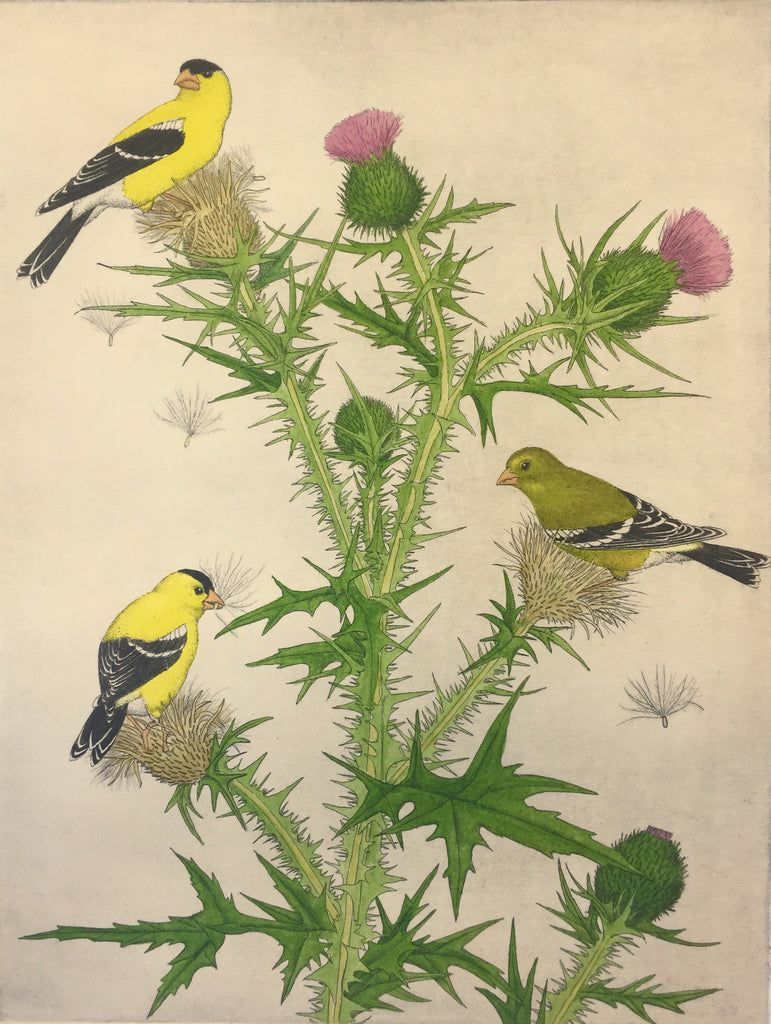 Goldfinches and Thistles